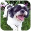 Photo 1 - Lhasa Apso Mix Dog for adoption in Los Angeles, California - FUJI