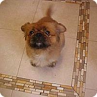 Adopt A Pet :: MOCHO MAN - Cathedral City, CA