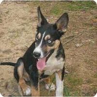 Adopt A Pet :: Ellie - Windham, NH