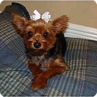 Adopt A Pet :: Sheba - Ocala, FL