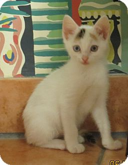 Calico Kitten for adoption in Coldspring, Texas - Neci