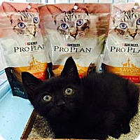 Adopt A Pet :: Ace - Omaha, NE