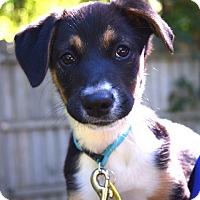 Adopt A Pet :: *Beanie Baby - PENDING - Westport, CT