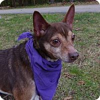 Adopt A Pet :: Tiger - Mocksville, NC