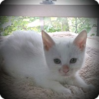 Adopt A Pet :: Ripley - Fairborn, OH