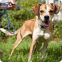 Adopt A Pet :: Kimber - Minneapolis, MN