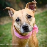 Adopt A Pet :: Cookie 2 - Miami, FL