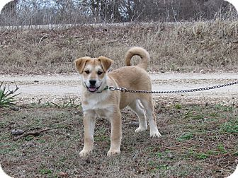 Husky Mix Puppy for adoption in Hartford, Connecticut - KODEE