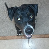 Terrier (Unknown Type, Medium) Mix Dog for adoption in Chandler, Arizona - COOPER 5