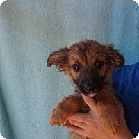 Adopt A Pet :: Neon - Oviedo, FL
