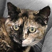 Adopt A Pet :: Rosie - Redondo Beach, CA