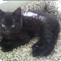 Adopt A Pet :: Java - Scottsdale, AZ