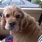 Adopt A Pet :: Queenie