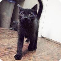 Adopt A Pet :: Mowgli - Dublin, CA