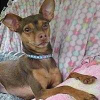 Adopt A Pet :: Max - Roslyn, WA