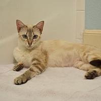 Adopt A Pet :: Athena 2 - Austin, TX