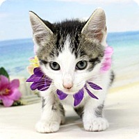 Adopt A Pet :: Jekyll - Harrisonburg, VA