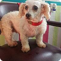 Adopt A Pet :: Blaze - Crump, TN
