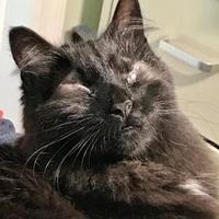 Adopt A Pet :: Piper - Ravenel, SC