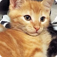 Adopt A Pet :: Fred - Grants Pass, OR