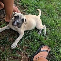 Adopt A Pet :: Peaches - Marlton, NJ