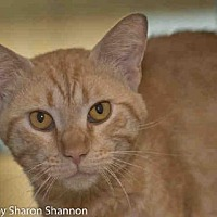 Adopt A Pet :: BORRIS - Albuquerque, NM