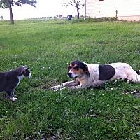 Adopt A Pet :: Emmy Lou - Pittsburg, KS