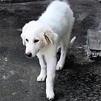 Adopt A Pet :: Darby - Kyle, TX