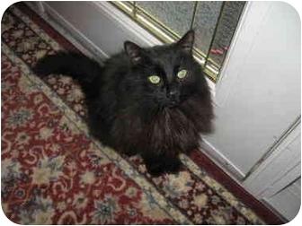 Domestic Longhair Cat for adoption in Alberta Beach, Alberta - 8 - Ball