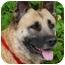 Photo 2 - German Shepherd Dog Mix Dog for adoption in Los Angeles, California - Cami von Callahan