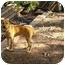 Photo 2 - Boxer/Labrador Retriever Mix Dog for adoption in Conyers, Georgia - Max