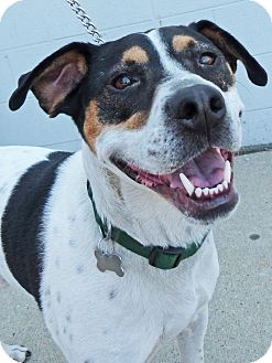 Hound (Unknown Type)/Labrador Retriever Mix Dog for adoption in Detroit, Michigan - Isaac-Adopted!