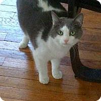 Adopt A Pet :: Jonas - Kensington, MD