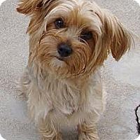 Adopt A Pet :: Madison #2 - Orange, CA