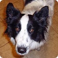 Adopt A Pet :: Breckin - Salt Lake City, UT