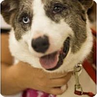 Adopt A Pet :: Fiona - Arlington, TX