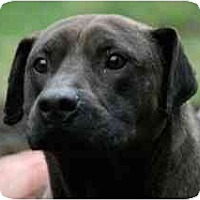 Adopt A Pet :: Bobby FOSTER NEEDED! - Seattle, WA