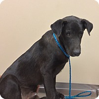 Adopt A Pet :: Black Jack - Providence, RI