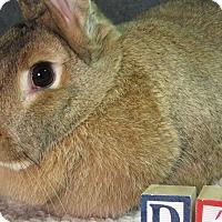 Adopt A Pet :: Dara - Newport, DE