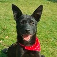Adopt A Pet :: Ginny - San Ramon, CA