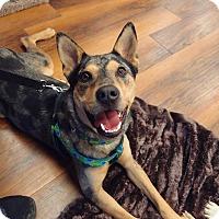 Adopt A Pet :: Nooka:social boy! (PA) - Madison, WI
