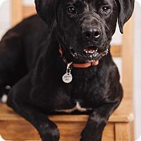 Adopt A Pet :: Bixby - Portland, OR