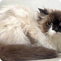 Adopt A Pet :: Mitzie - Wildomar, CA