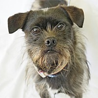 Adopt A Pet :: NORY - Pt. Richmond, CA