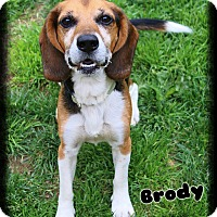 Adopt A Pet :: Brody - Shippenville, PA