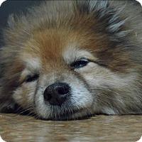 Adopt A Pet :: Rusty - Sheboygan, WI