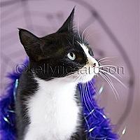 Adopt A Pet :: Opal - Oviedo, FL