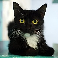Adopt A Pet :: Skylynn - Tucson, AZ