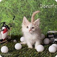 Adopt A Pet :: Donatello - Scottsdale, AZ