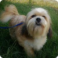 Adopt A Pet :: BENJI - Anderson, SC